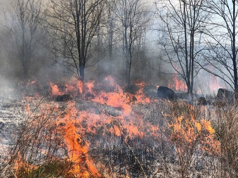 Cows, fire, and grasses: Reimagining routine tools