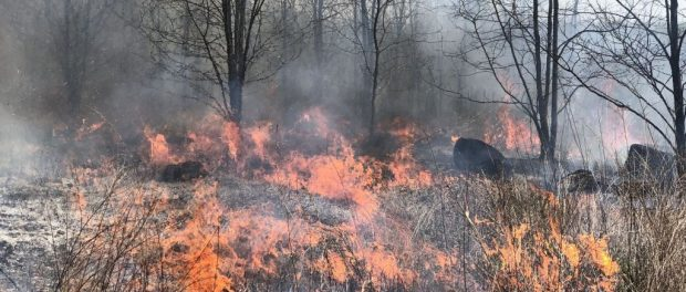 Benefits of Controlled Burns